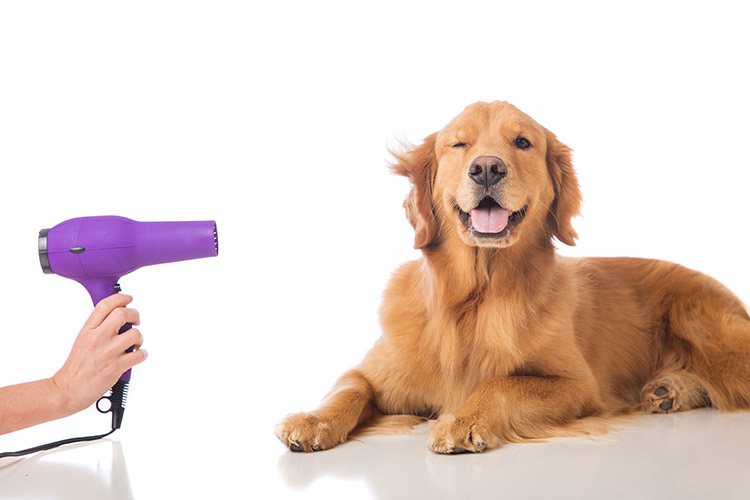 Dog and Pet Grooming